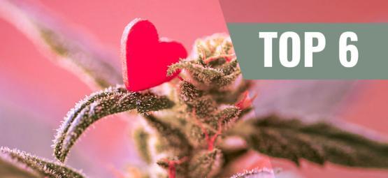 Las 6 Variedades De Cannabis Más Cariñosas