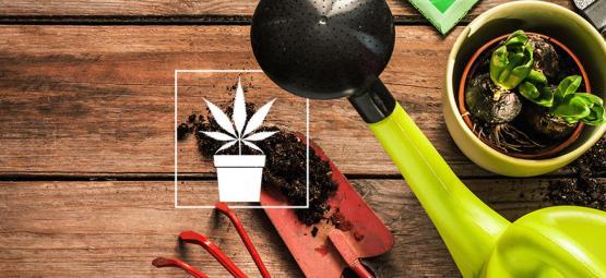 10 Herramientas Indispensables Para El Cultivador De Cannabis