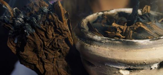7 Plantas Sagradas De Todo El Mundo