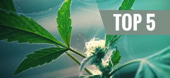 Los 5 Mejores Repelentes Naturales De Plagas Para El Cannabis