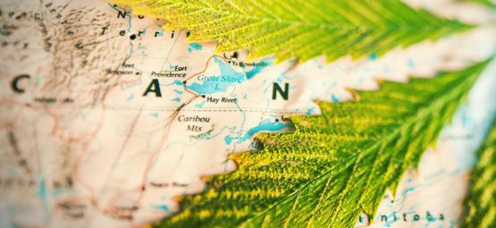 ¿En Qué Países Se Fuma Más Hierba?