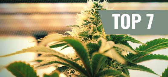 Top 7 De Factores De Iluminación Para Cultivar Marihuana