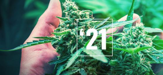 Las Mejores Variedades De Cannabis Para 2021