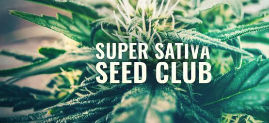 ¡Super Sativa Seed Club Ha Vuelto!