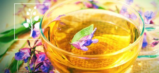 Cómo Hacer Té De Salvia Divinorum