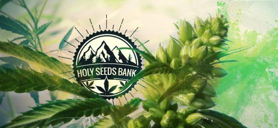 Zamnesia Presenta: Polen Holy Seeds Bank