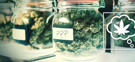 ¿Cómo Debemos Denominar Las Variedades De Cannabis Del Futuro?