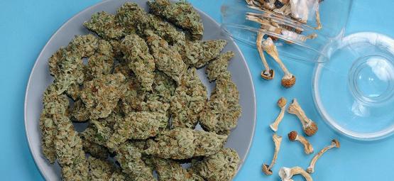 ¿Se Pueden Mezclar Marihuana Y Setas Mágicas?