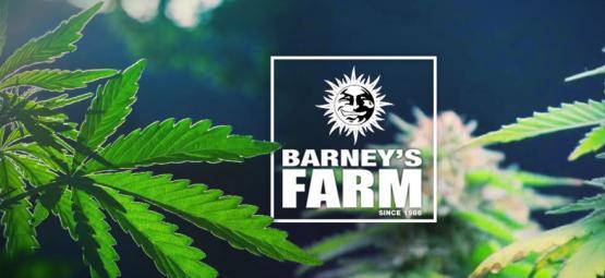 Las Mejores Cepas De Cannabis De Barney's Farm