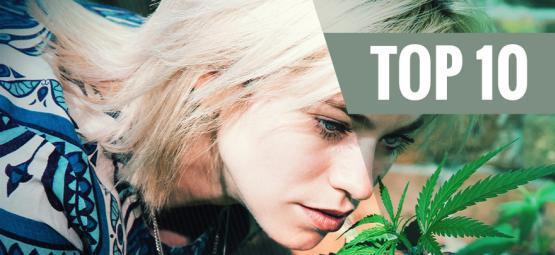 Top 10 De Variedades De Cannabis Poco Aromáticas
