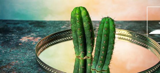 5 Mitos Falsos Sobre El Cactus San Pedro
