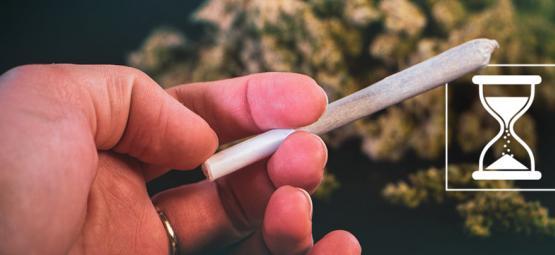 ¿Caduca La Marihuana? Cómo Conservar La Calidad De Tus Cogollos