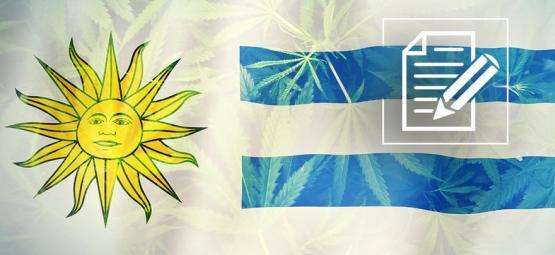 Uruguay: El Paraíso Del Cannabis Se Ha Convertido En Un Caos