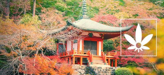 Cáñamo Hokkaido: Una Cepa Pura De Japón