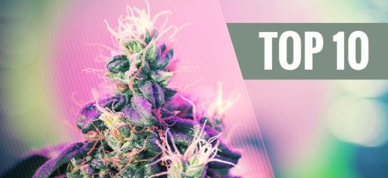 Top 10 De Cepas De Cannabis Premiadas