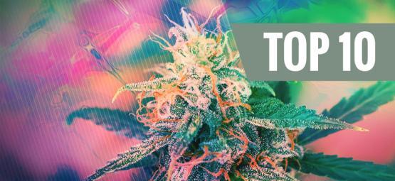 Las 10 Variedades De Cannabis Más Psicodélicas