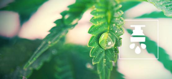 Las Ventajas De Los Sistemas De Irrigación Para El Cannabis