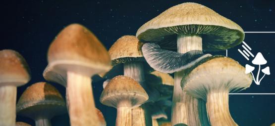 ¿Cuánta Luz Necesitan Las Setas Mágicas Para Crecer?