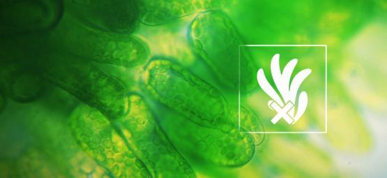 Cómo Eliminar Y Prevenir Las Algas En Cultivos Hidropónicos