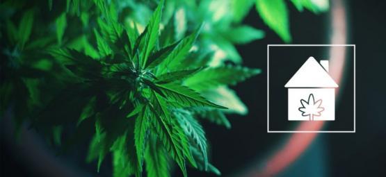 Cómo Cultivar Cannabis En Cualquier Parte De Tu Casa
