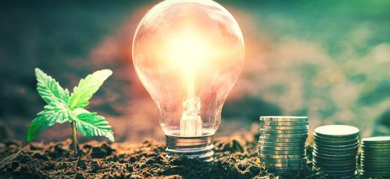 Se Van con el Humo: Los Costes Energéticos del Cultivo Interior de Cannabis