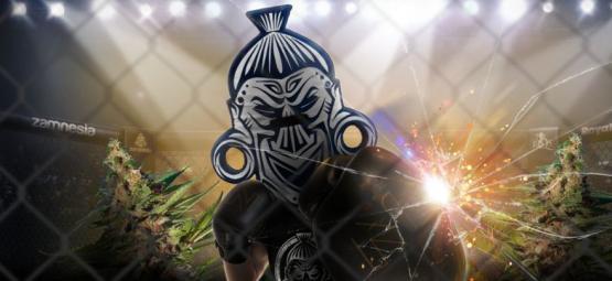 Zamnesia x Royal Queen Seeds: ZZ Punch (Edición Limitada)