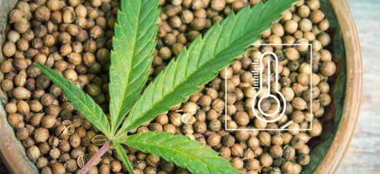 La Mejor Marihuana De Exterior Para Los Climas De Europa