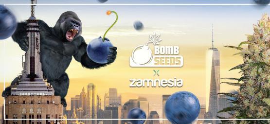 Zamnesia x Bomb Seeds: Bomberry Glue Auto (Edición Limitada)