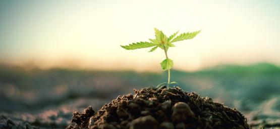 Cómo Hacer Tu Propio Compost Para Cultivar Cannabis