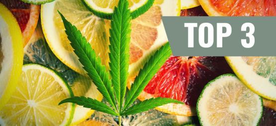 Las 3 Mejores Variedades De Marihuana Según Los Terpenos
