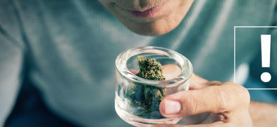 Cómo Identificar Las Impurezas De Los Cogollos De Marihuana