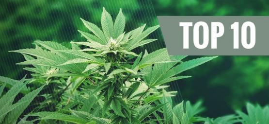 Los 10 Mejores Usos del Cáñamo: Una Planta Revolucionaria | Parte 1