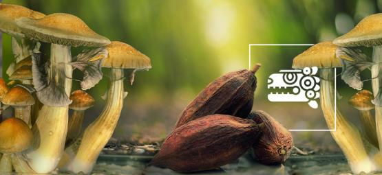 El Combinado Azteca: Setas Mágicas Y Cacao