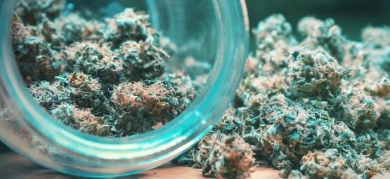 Cómo Secar Y Curar Correctamente Un Brote De Cannabis