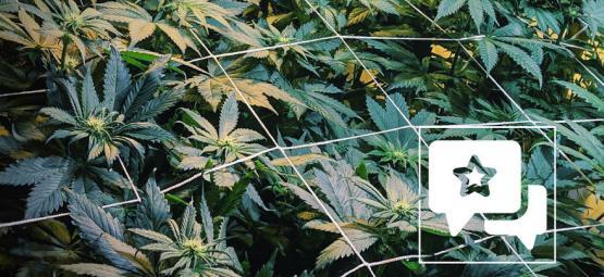 Reseña de Cepa: Casey Jones