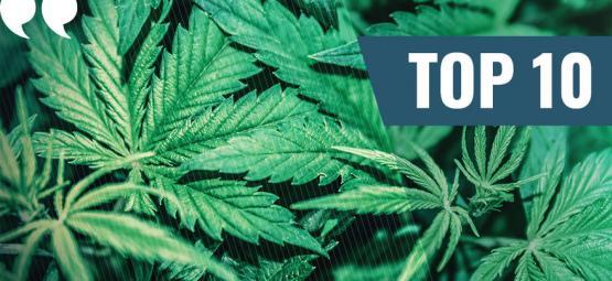 Top 10 De Citas Sobre La Marihuana