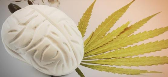¿Qué Hace El Cannabis A Tu Cerebro?