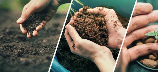 ¿Deberías Cultivar Marihuana Usando Tierra, Coco O Hidroponía?