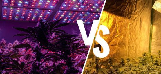 Luces de Cultivo: LED vs. HPS