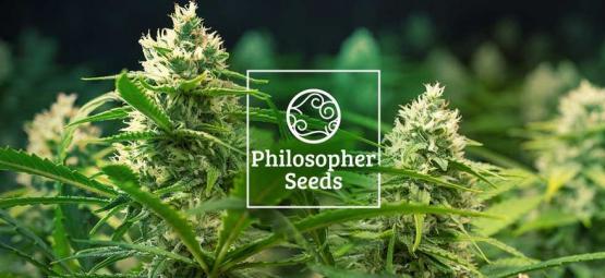 5 Consejos De Philosopher Seeds Para El Cultivo De Semillas Autoflorecientes