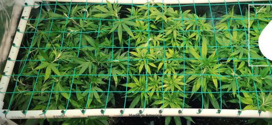 Cultivo de Alta Eficiencia con Aeropónicos