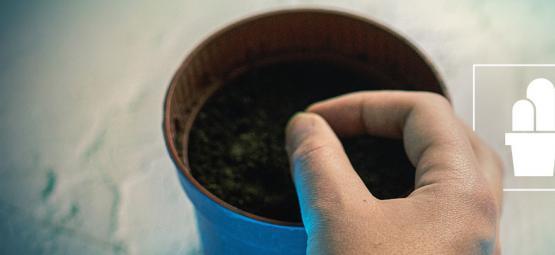Cultivo de Cactus a partir de Semillas y Esquejes