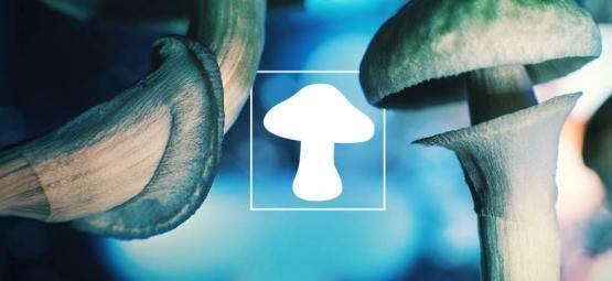 La Seta - ¿Un Amigo Extraterrestre del Espacio Exterior?