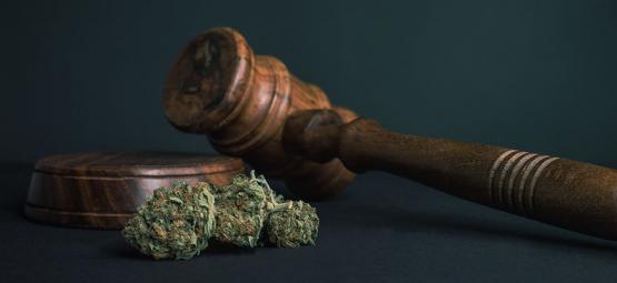10 Razones Para Legalizar TODAS Las Drogas