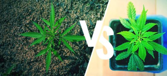 Cultivo Exterior De Marihuana: Suelo Vs Tiestos
