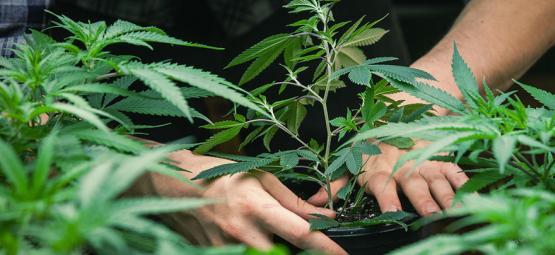 Entrevista Con Jorge Cervantes: El Padre De La Guía Del Cultivo Del Cannabis