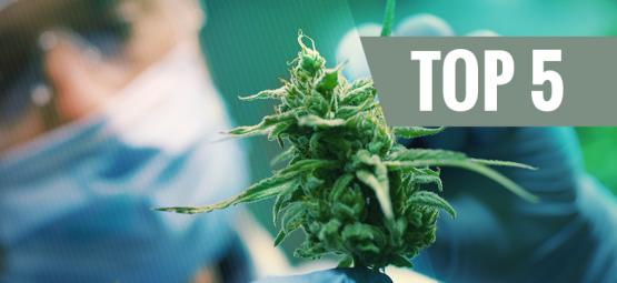Las 5 Mejores Cepas De Cannabis Ricas En CBD