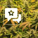 Reseña de variedad: The Church de Greenhouse Seeds