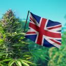 La mejores semillas de marihuana para el clima británico