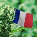 Mejores variedades de exterior para cultivar en Francia